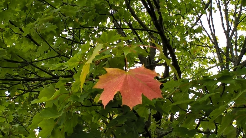 autumn leaf 2.jpg
