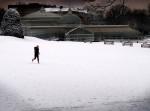 glasgow botanic snow.jpg